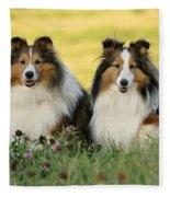 Shetland Sheepdogs Fleece Blanket