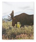Shiras Bull Moose Fleece Blanket