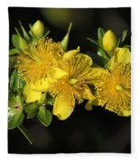 Shrubby St Johnswort Dsmf094 Fleece Blanket