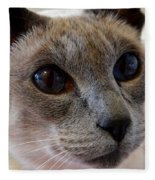 Siamese Cat Peers Into Unknown Fleece Blanket