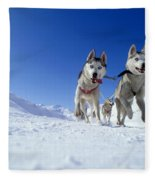 Siberian Husky Dogs Fleece Blanket