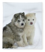 Siberian Husky Puppies Fleece Blanket