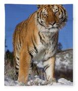Siberian Tiger No. 1 Fleece Blanket