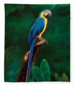 Singapore Macaw At Jurong Bird Park  Fleece Blanket