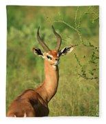 Single Grant's Gazelle Fleece Blanket