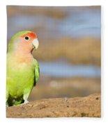 Single Love Bird Seeks Same Fleece Blanket