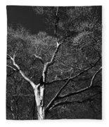 Single Tree With New Spring Leaves In Black And White Fleece Blanket