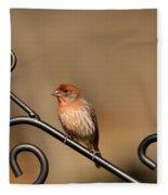 Sitting Pretty Red House Finch Fleece Blanket