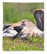 Sleepy Baby Sandhill Crane Fleece Blanket