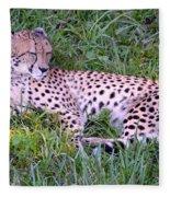 Sleepy Cheetah Fleece Blanket