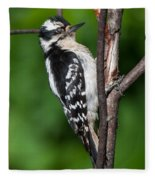 Sleepy Woodpecker Fleece Blanket