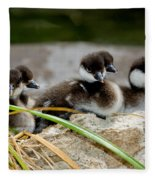 Smew Ducklings On Shore Fleece Blanket