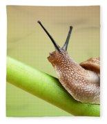 Snail On Green Stem Fleece Blanket