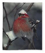 Snow Covered Pine Grosbeak Fleece Blanket