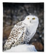 Snowy Owl Cold Stare Fleece Blanket