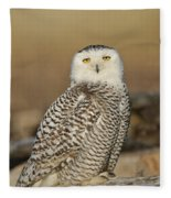 Snowy Owl Female Fleece Blanket