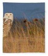 Snowy Owl Morning Fleece Blanket