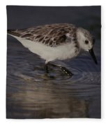 Snowy Plover Fleece Blanket