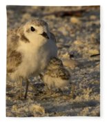 Snowy Plover Transforms Into A Spiderbird 5 Fleece Blanket