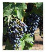 Sonoma Vineyards In The Sonoma California Wine Country 5d24630 Square Fleece Blanket