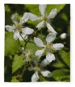 Southern Sawtooth Highbush Blackberry Blossoms - Rubus Argutus Fleece Blanket