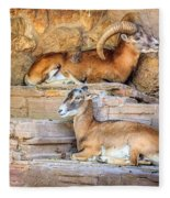 Spanish Ibex Fleece Blanket