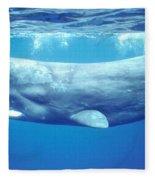 Sperm Whale Fleece Blanket
