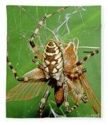 Spider Eating Moth Fleece Blanket