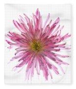 Spider Mum Flower Against White Fleece Blanket
