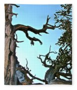 Spooky Bristlecone Pine At Spectra Point On Ramparts Trail In Cedar Breaks National Monument-utah  Fleece Blanket
