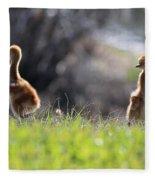 Spring Chicks In The Sunshine Fleece Blanket