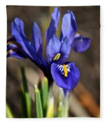 Spring Iris Fleece Blanket