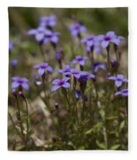 Springtime Tiny Bluet Wildflowers - Houstonia Pusilla Fleece Blanket