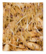 Sprouting Russian Banana Fingerling Seed Potatoes Fleece Blanket