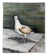 St Augustine Gull Fleece Blanket