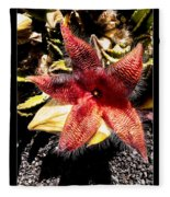 Stapelia Grandiflora Starfish Cactus Fleece Blanket