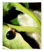 Steel Blue Ladybird Fleece Blanket
