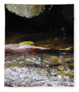 Steelhead Resting In The Shallows Fleece Blanket