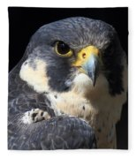 Steely Stare Fleece Blanket