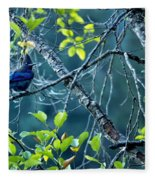 Steller's Jay In A Tree Fleece Blanket