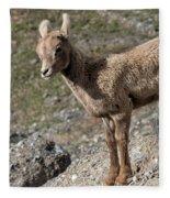Stone Lamb Fleece Blanket