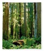 Stout Grove Coastal Redwoods Fleece Blanket