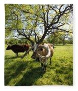 Stunning Texas Longhorns Fleece Blanket
