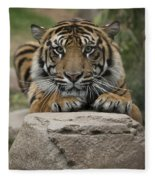 Sumatran Tiger Fleece Blanket