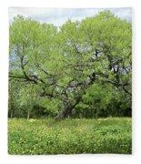 Summer Mesquite Tree Fleece Blanket