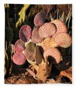Sun On Cactus Fleece Blanket