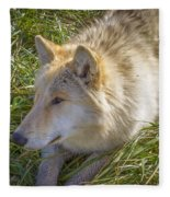 Sun Soak Fleece Blanket