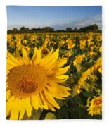 Sunflowers At Dawn Fleece Blanket