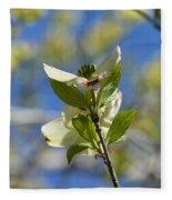 Sunlit Dogwood Blossoms Fleece Blanket