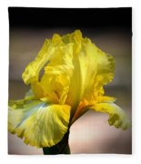 Sunlit Yellow Iris Fleece Blanket